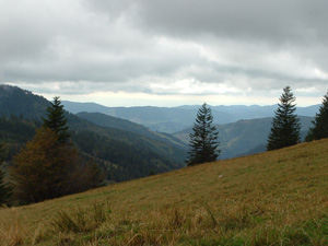 Feldberg